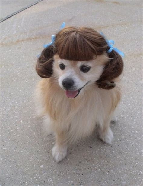 dogs with human hair if dogs had human hair styles that hair pets puppys and style