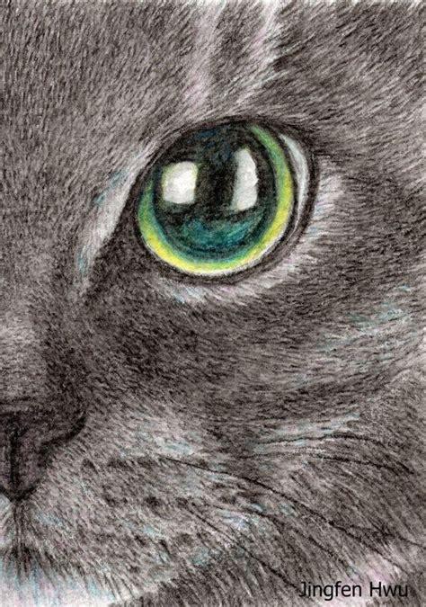 cat eye drawing lifelike realistic cat drawing watercolor pencil the
