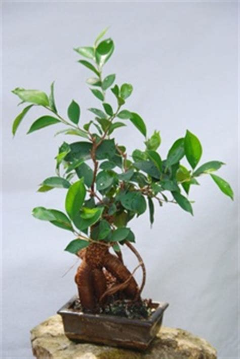 Zimmerpflanzen Feng Shui by Zimmerpflanzen Nach Feng Shui Wohnen De Ratgeber
