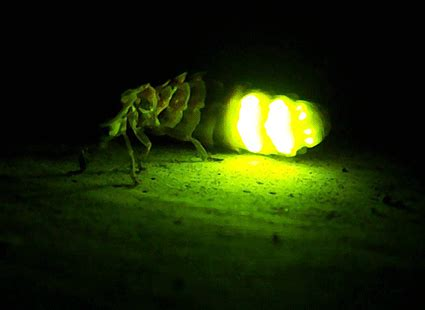 imagenes con movimiento como se llaman luminiscencia de las luci 233 rnagas escuelapedia recursos