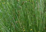 casa di cura stagno piante acquatiche quali e come coltivarle nel laghetto
