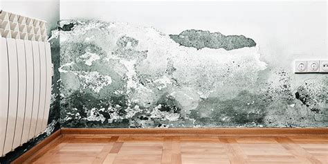 how to remove mold from house 4 ways to remove mold from your house