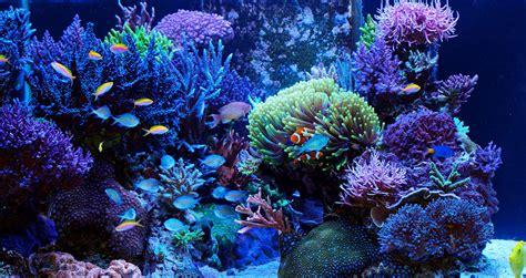 eau de mer aquarium et mur v 233 g 233 tal