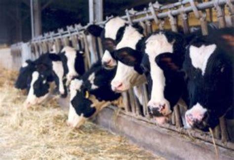 razione alimentare bovini da latte gli allevamenti da latte non inquinano anche se 232