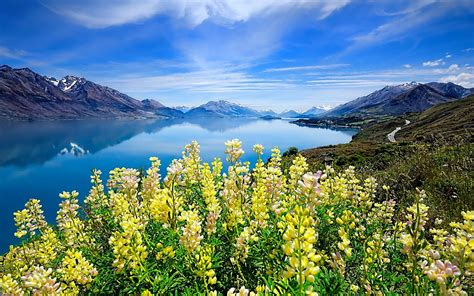 landscape lake mountains background meadow yellow flowers