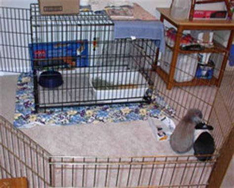 Flooring For Dog Pens by Rabbit Housing Options