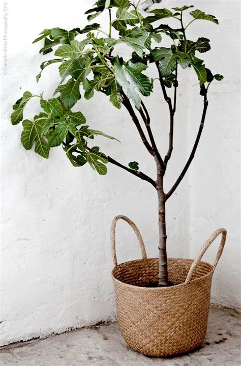 in door plants pot three four plants argements video indoor tree with basket planter do it yo self