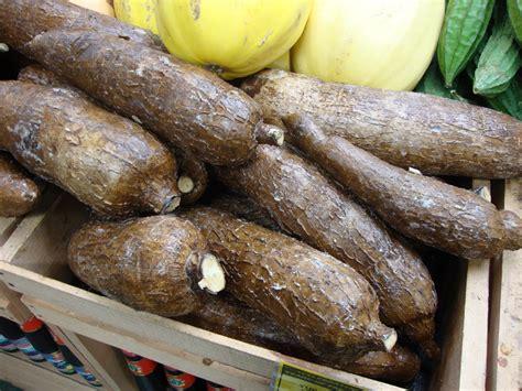 yucca root vegetable danger garden uwajimaya
