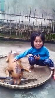 World Market Armchair 2015 Chinese Water Dog Autos Post