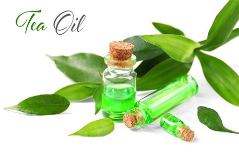 is tea tree oli for ingrowing hairs beauty diy coconut 7 easy ways to get rid of ingrown hair causes and prevention