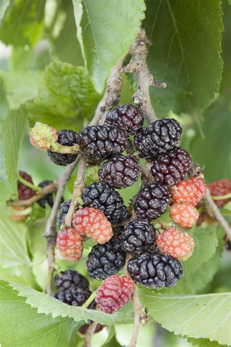 fruit trees in the five easiest fruit trees to grow the garden
