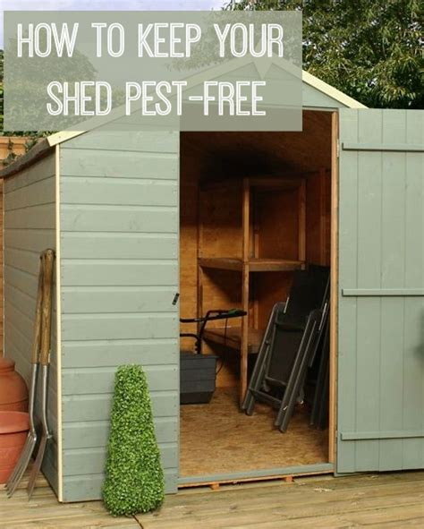 how to keep a from shedding how to keep your shed free from pests chic living