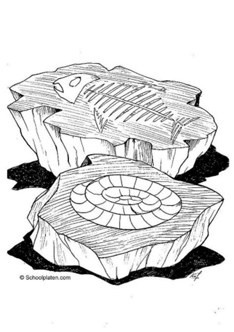 fossil coloring pages kid crafts pinterest