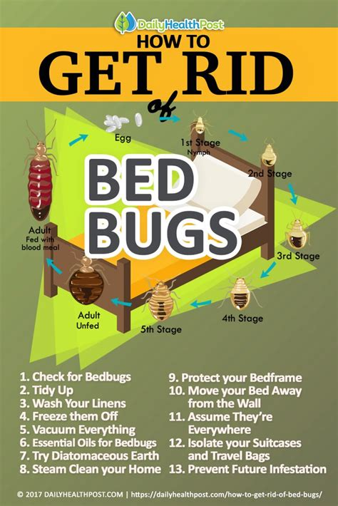 rid  bed bugs  effective chemical  tricks