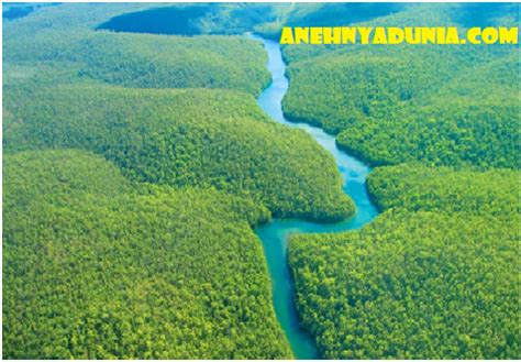 amazon hutan 8 hewan unik hutan amazon anehnya dunia