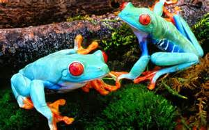 colorful animals animal wallpaper hd frog photos most beautiful colorful