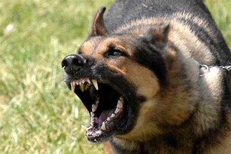 Utah Dog Bite Lawsuit   Siegfried & Jensen