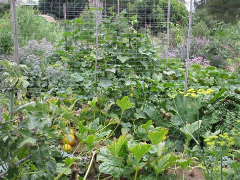 Edible Forest Gardens by Finch Frolic Gardens Permaculture Organic Gardening Habitat Tours Workshops