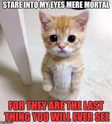 cute cat memes imgflip