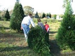 best christmas tree farm in louisiana home www windyhillsfarm net
