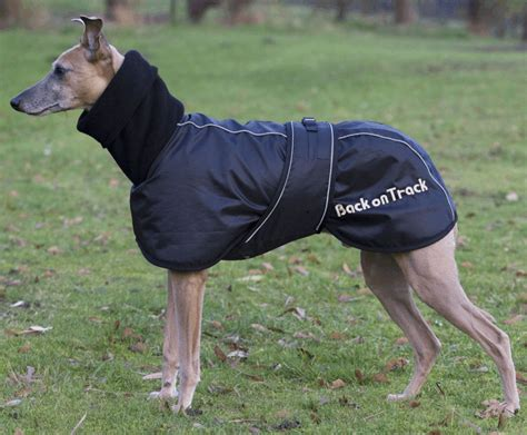 back on track rug back on track whippet rug canine therapy centre