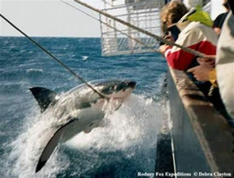 fishing boat attacked by shark megalodon 199 best images about shark week on pinterest whale