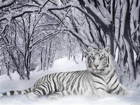 define magnificent magnificent high definition photos pinterest
