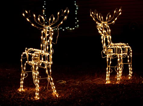 reindeer holiday lights picture free photograph photos