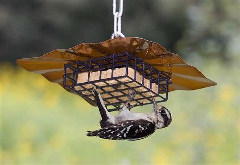 duncraftcom upside  disk suet feeder