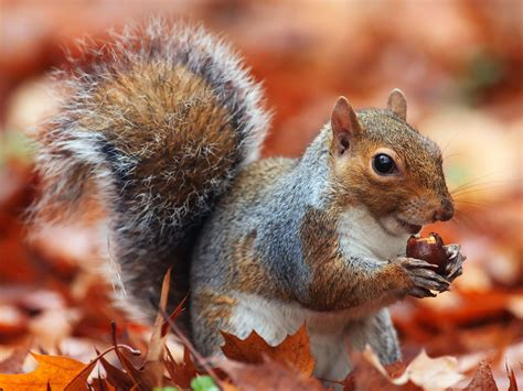 libro animal seasons squirrels autumn spirit animal squirrel meaning wild gratitude