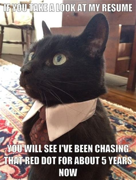 Black Cat Meme - business cat black cat memes pinterest