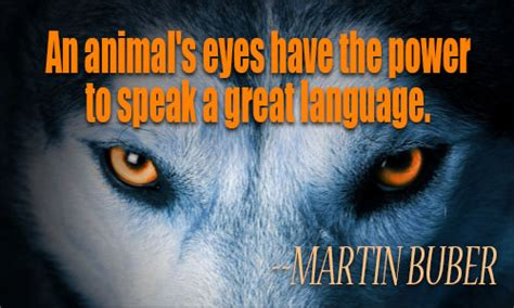 quotes about animals 72 inspiring animals quotes and sayings about animal