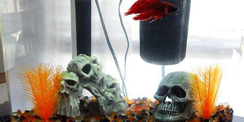 halloween themes line halloween themed betta tank inspiration bettafish org