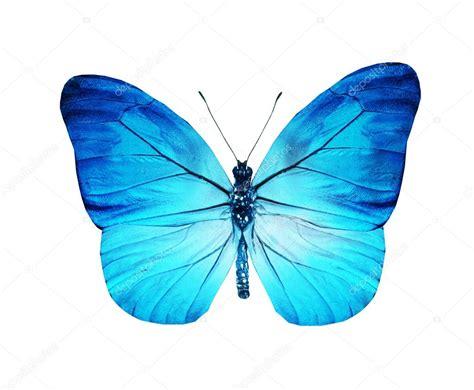 imagenes de mariposas azul turquesa mariposa azul turquesa aislado en blanco foto de stock