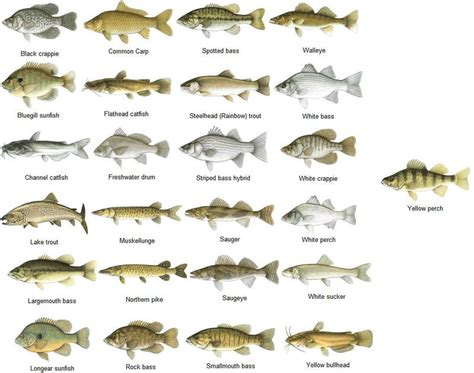 freshwater fish freshwater fish of texas freshwater fishes of texas 2017