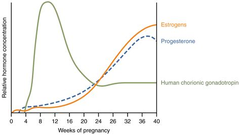 menstrual cycle after c section menstrual cycle after c section molar pregnancy wiki
