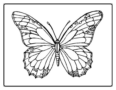 free butterfly picture coloring pages cartoon kids