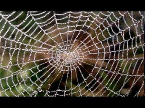 imagenes de estructuras naturales tela de ara 209 a youtube