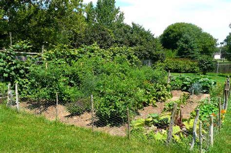 backyard fruit and vegetable garden how to