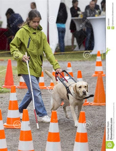 golden retriever blind guide blind person with guide editorial photo image 56235681