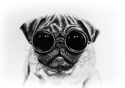 pug with glasses speed drawing pug with glasses