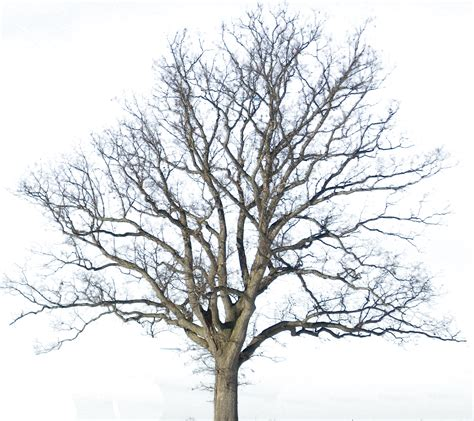 pictures of trees tree clipart