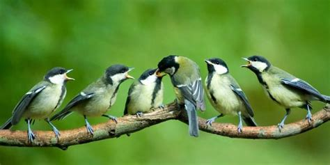 Birds Of Bangladesh Essay birds of bangladesh essay essay and paragraph