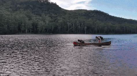 row the boat gif boat row gif find share on giphy
