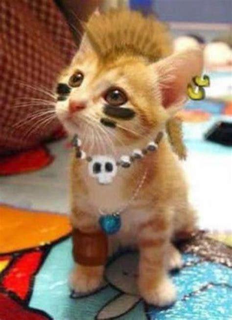 Inidia Cat 33 indian cat