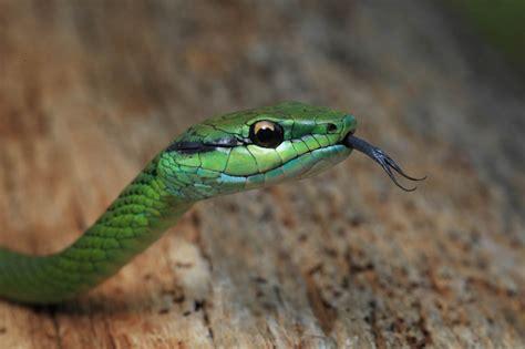 imagenes de serpientes verdes so 241 ar con culebras