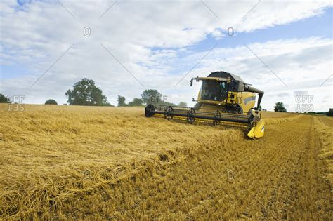 Exclusive Exclusive Corn New Corn Cut Model Bisa Bua a combine harvester in a field cutting a field of corn stock photo offset