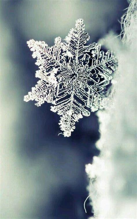 imagenes de invierno reales m 225 s de 25 ideas fant 225 sticas sobre fondos de pantalla