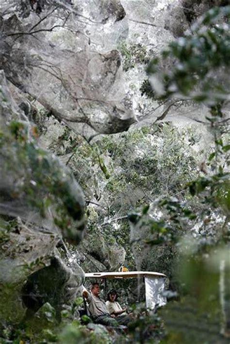 worlds biggest spider web