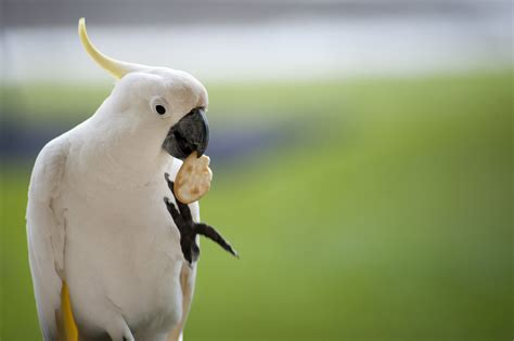 what do cracker beak birds eat free stock photo 4253 polly want a cracker freeimageslive
